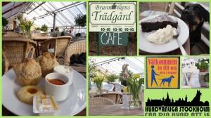 Brunnsviken trädgård cafe