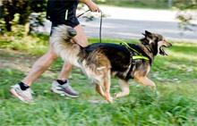 Foto från hundlopet.se