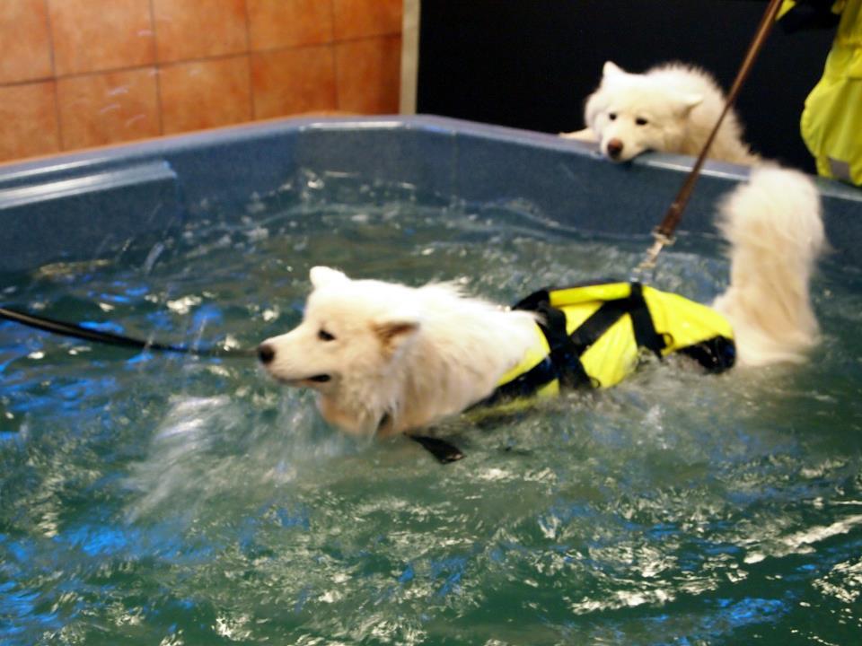 Färingsö Hund & Djurcenter