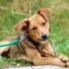 Foto från Hundar utan Hem