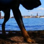 Långholmen Hundbad