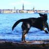 slider-langholmen-hundbad