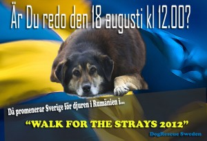 Walk for the strays