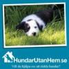 Hundar utan hem återträff 2012
