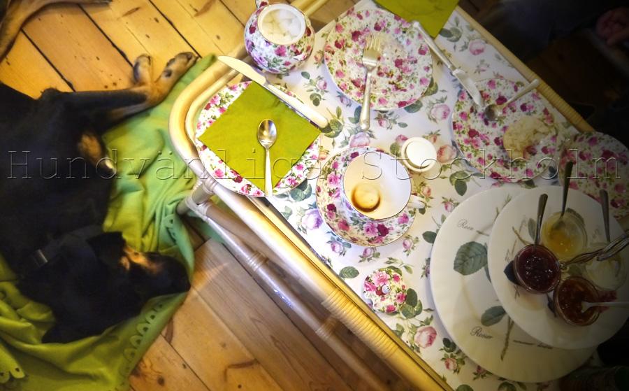 Hunden sover på filten mellan husse och matte fikar