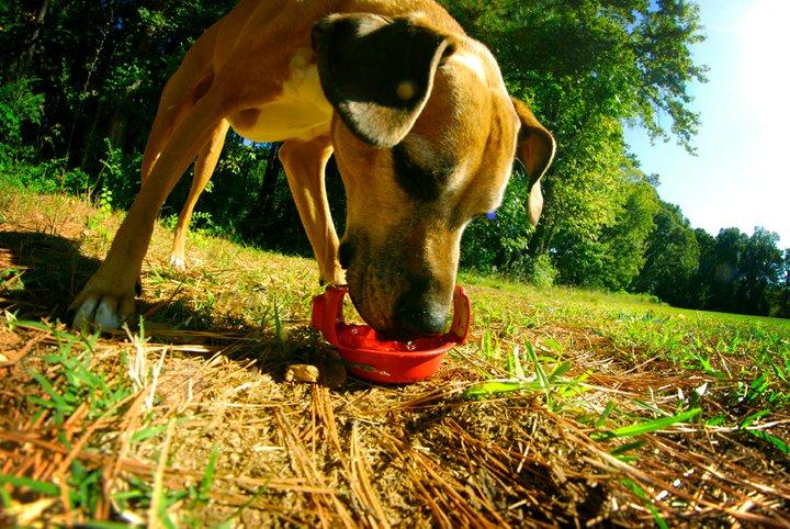 Foto från ruffbowl.com