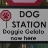 Doggie gelato