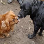 Elvis och Otto hälsar på varanda
