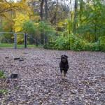 Rissne hundpark