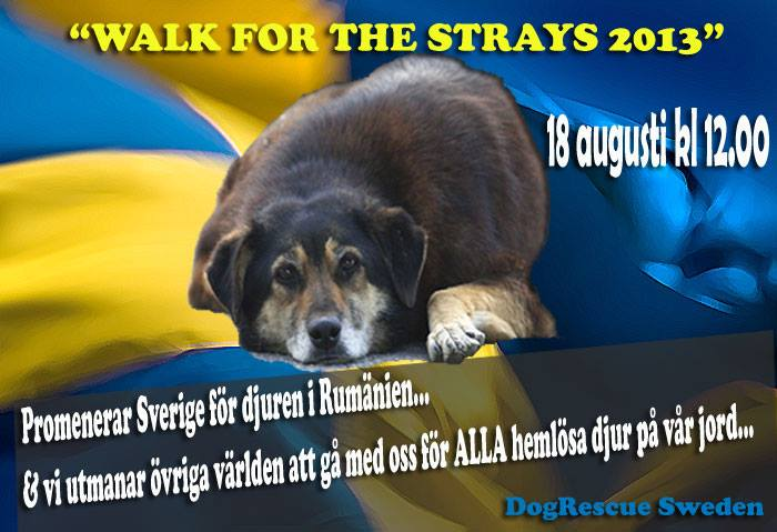 Walk for the strays 2013