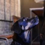 brewdog-soder-007