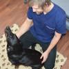 Hund akupunktur