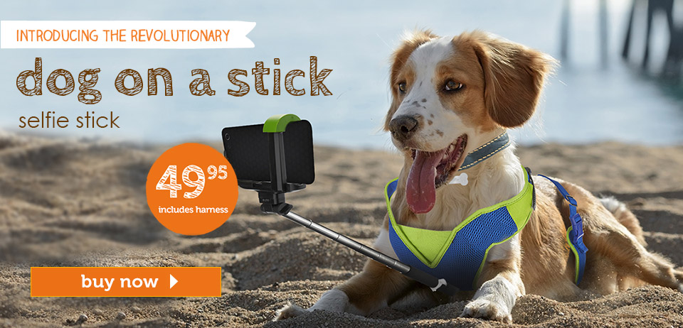 selfie-stick-dog