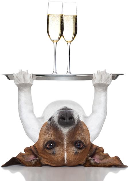 hund-champagne-v3
