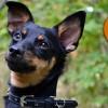 Foto från hundstallet.se