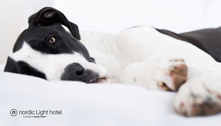 Foto från nordiclighthotel.se