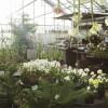 rosendals